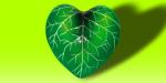 cuore8